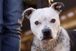 ¿Pueden los perros detectar cáncer en humanos?.
