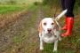 ¿Es seguro el ejercicio para las mascotas con cáncer?