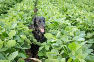 Envenenamiento por insecticidas en perros