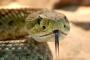 Prueba de 6 preguntas para probar tu conocimiento de serpiente