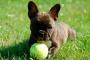 Infección bacteriana (Leptospirosis) en perros