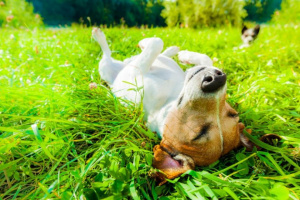 ¿Por qué a los perros les encanta recostarse en el sol?