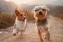Linfadenopatía grave en perros