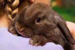 Excesiva salivación en los conejos