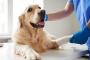Problemas óseos que pueden afectar a su mascota.