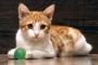 Inflamación cerebral en los gatos