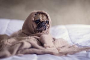 Tienda de mascotas cachorros propagando la enfermedad