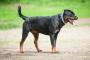 Estrechamiento del canal vertebral en perros