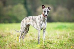 Consejos de seguridad para usar Heartworm Medicamentos preventivos en perros