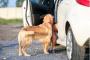 ¿Cómo elijo el mejor cinturón de seguridad para mi perro?