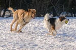 Diversión de invierno con perros