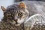 Cáncer del útero en los gatos