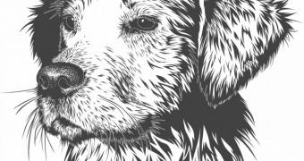 Marihuana y perros