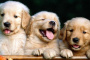 ¿Qué mantiene a las pulgas fuera de los perros?
