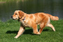Dolor neuropático en perros