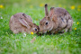 Cómo mantener a tus conejos frescos este verano