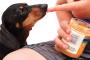 ¿Pueden los perros comer almendras, cacahuetes, pistachos y otras nueces?