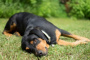 Acidosis metabólica en perros: síntomas, causas y tratamientos.