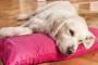 Toxicidad por etilenglicol (envenenamiento por anticongelante) en perros: síntomas, causas y tratamientos.