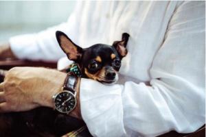 5 razones comunes por las que los perros pequeños necesitan un veterinario