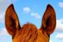 Placa interna del oído en caballos
