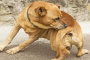 Eccema en perros: síntomas, causas y tratamientos.