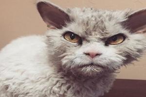 La agresión de gatos: Hiperestesia