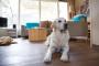 5 Problemas comunes de capacitación para perros en la casa y cómo solucionarlos