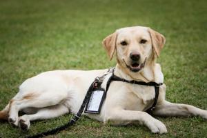 Queratitis ulcerativa en perros