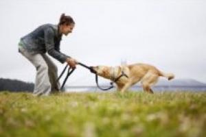 Cómo detener las mordeduras de perro