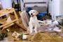 Consejos a la hora de dejar solo a tu perro en casa