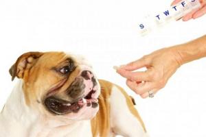 Levotiroxina para perros: usos, dosis y efectos secundarios.