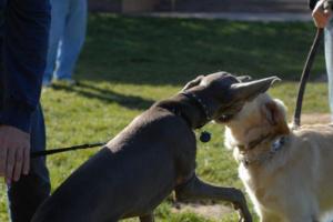 7 signos de artritis que todos los dueños de perros deben tener en cuenta