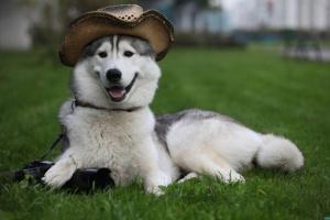 Toxicosis fúngica relacionada con hongos Fusarium en perros
