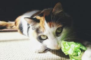 ¿Por qué los gatos comen y mastican plástico?