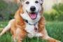 Adopción de mascotas adultas
