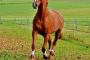 Anemia en caballos