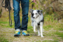 Maneras de pasear a tu perro ¡Haciendo ejercicio!