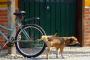¿Tu perro está orinando mucho? ¿Deberías preocuparte?