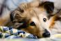 10 consejos para caminar con perros que todo el mundo debería saber