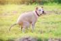 Defecación difícil y sangre en heces en perros