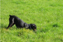 ¿Por qué mi perro come hierba?