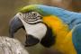 El comportamiento de las aves al morder