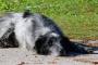 Amitriptilina para perros: usos, dosis y efectos secundarios.