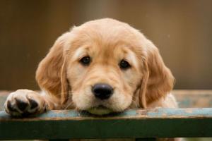 Síntomas y prevención de la diabetes canina