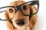 Seguridad Navideña para tu perro