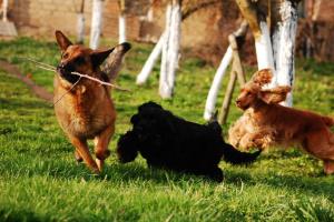 Cómo elegir una perrera o criadero