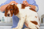 Peróxido de hidrogeno en perros