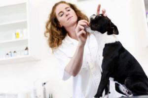 Metronidazol para perros: usos, dosis y efectos secundarios.