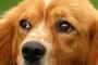 Cómo identificar gusanos de perro